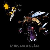 insectes-et-guepe